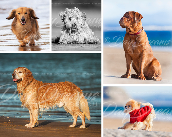 Abersoch DayDreams | Framing Ideas | Make your own dog Collage